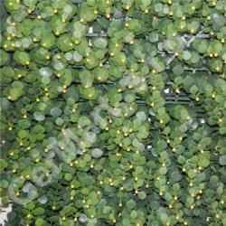 YELLOW BERRY (50x50cm)