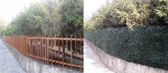 THUJA - obklad plotu